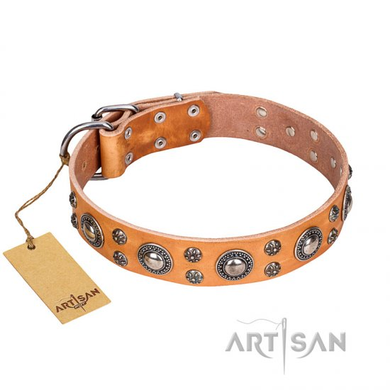 'Extra Sparkle' FDT Artisan Handcrafted Belgian Malinois Tan Leather Dog Collar
