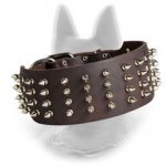 Spiked Leather Belgian Malinois Collar 3 Inch Wide