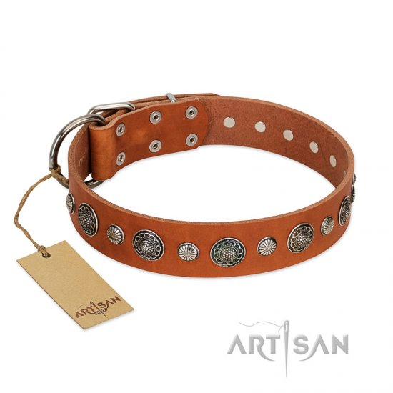 """Natural Beauty"" FDT Artisan Tan Leather Belgian Malinois Collar with Shining Silver-like Studs"