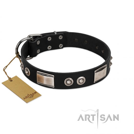 """Grand Wear"" FDT Artisan Black Leather Belgian Malinois Collar with Shining Plates and Spiked Studs"