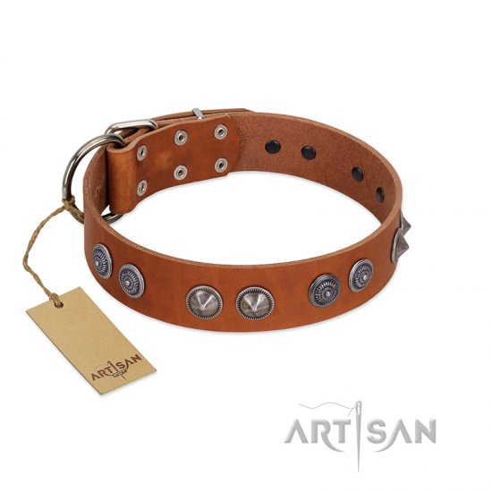 """Silver Necklace"" Incredible FDT Artisan Tan Leather Belgian Malinois Colar with Silver-Like Adornments"