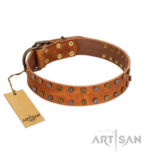 """Walk and Shine"" FDT Artisan Tan Leather Belgian Malinois Collar with Antiqued Studs"