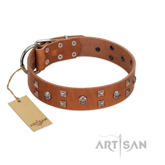 """Enchanted Skulls"" FDT Artisan Tan Leather Belgian Malinois Collar with Chrome Plated Skulls"
