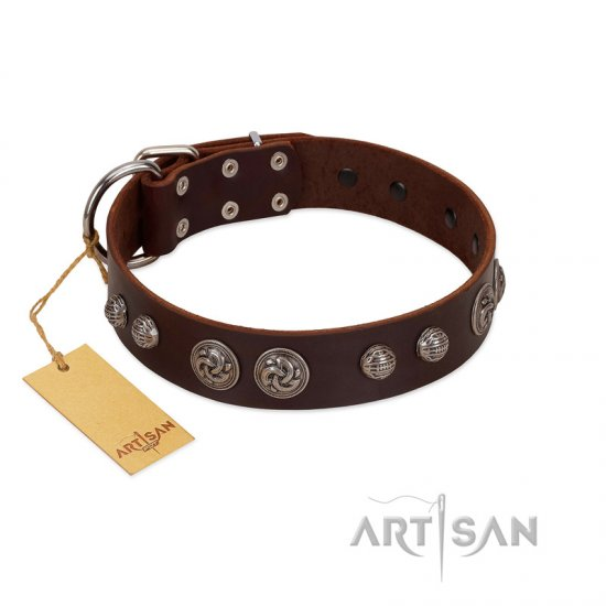 """Choco Brownie"" FDT Artisan Brown Leather Belgian Malinois Collar Adorned with Silver-Like Conchos"