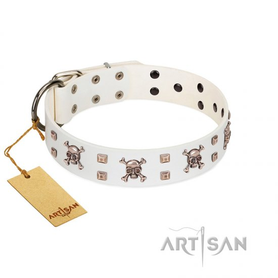 """Skull Island"" Premium Quality FDT Artisan White Designer Belgian Malinois Collar with Crossbones and Studs"