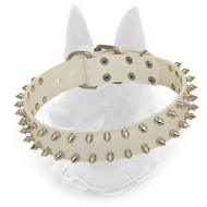 """White Rose"" Leather Belgian Malinois Collar with Nickel Spikes Decoration"