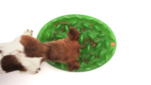 Interactive Grassy Plate Hard Plastic Dog Feeder for Wet and Dry Food