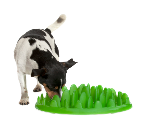 High Quality Interactive Green Grass Shaped Plastic Dog Feeder