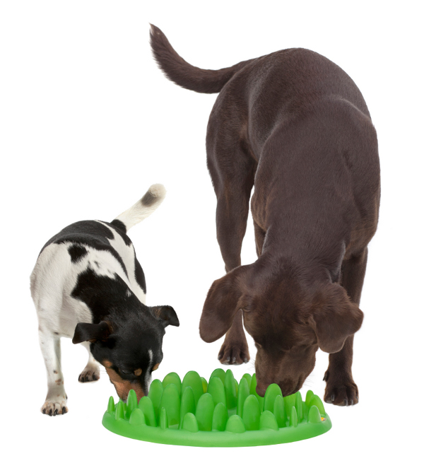Two Dogs Eating from Interactive Plastic Slow Dog Feeder