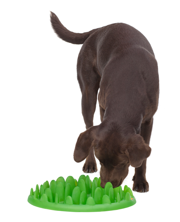 Revolutionary Grassy Plate Plastic Dog Feeder for Slower Eating