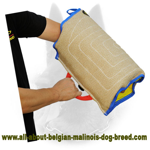 Bite Sleeve for Belgian Malinois Puppy Training