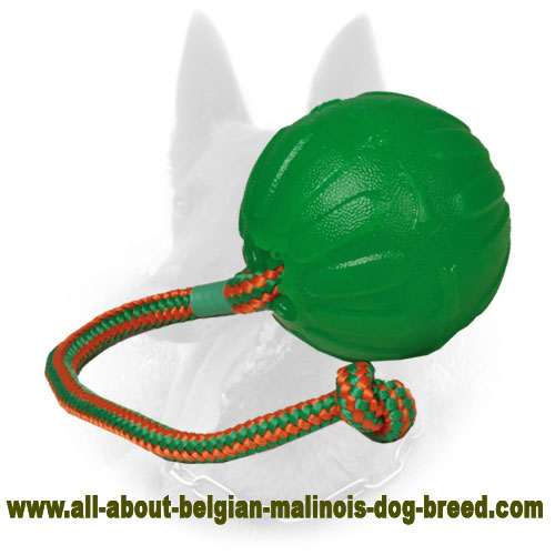 Green Tetraflex Belgian Malinois Ball of Rubber