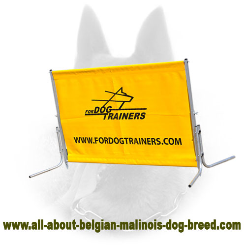 Training Belgian Malinois Jump Barrier