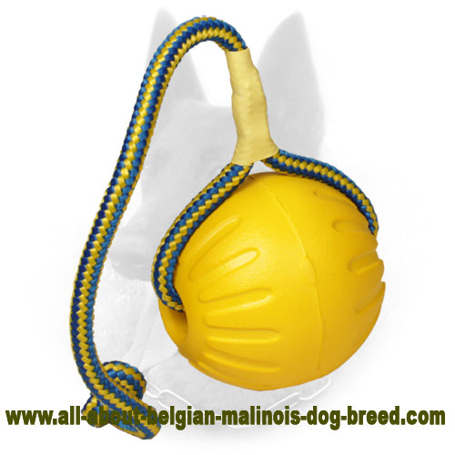 Amazing Belgian Malinois Water Ball for Interactive Training