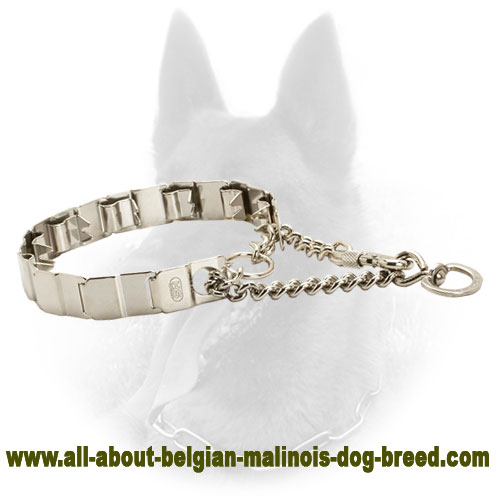 Strong Belgian Malinois Herm Sprenger Collar