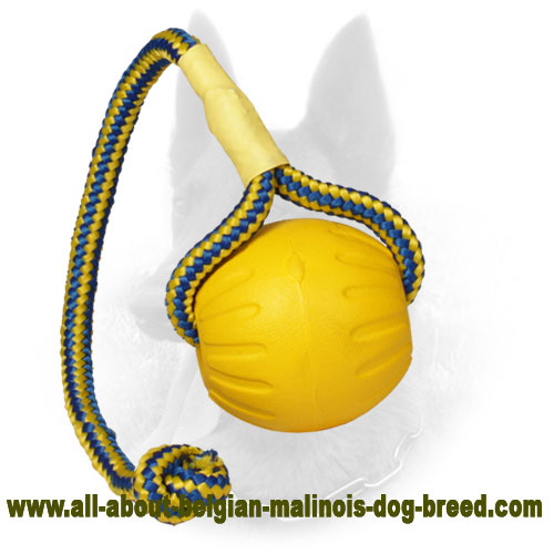 Interactive Belgian Malinois Water Ball for Easy Training