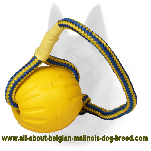 Foam Belgian Malinois Ball for Training in Water