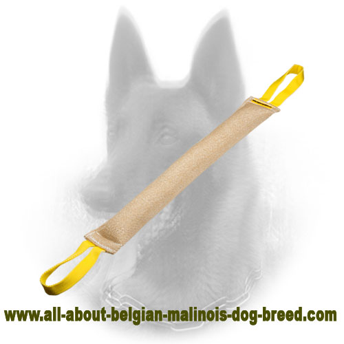 Unmatchable Belgian Malinois Bite Tug with Strong Handles