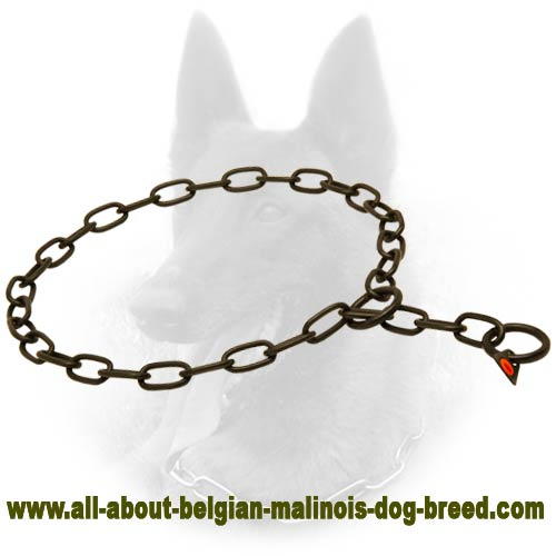 Reliable Belgian Malinois Collar of Stainless Steel