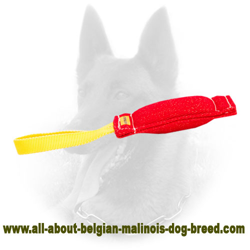 Training Belgian Malinois Bite Tug with Comfy Handle