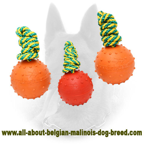 Rubber Belgian Malinois Water Ball with Solid Surface