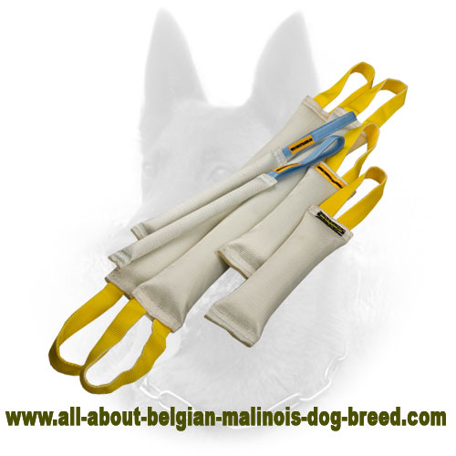 Longevous Belgian Malinois Bite Tug Set for Training
