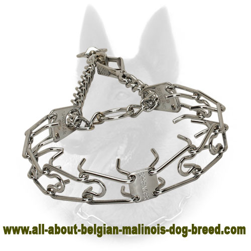 Chrome-Plated Belgian Malinois Pinch Collar