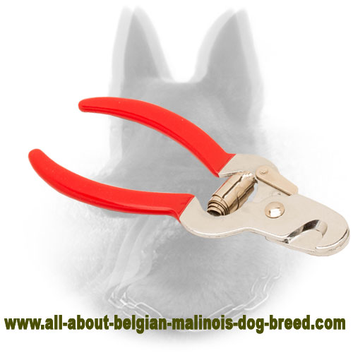 Belgian Malinois Nail Trimmer