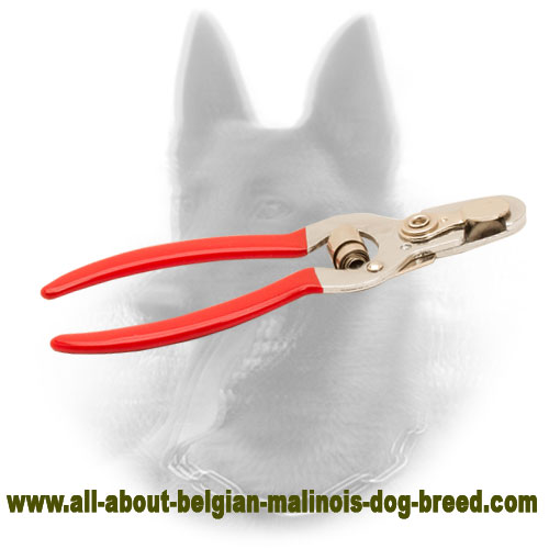 Comfy Belgian Malinois Nail Trimmer of Steel