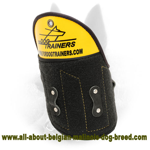 Shoulder Shield for Belgian Malinois Training