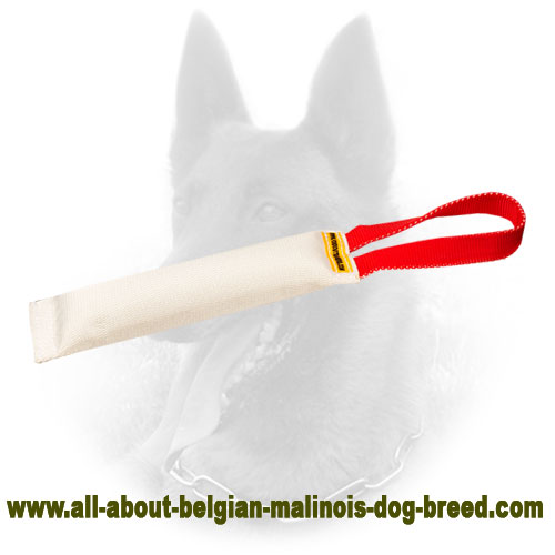 Amazing Belgian Malinois Bite Tug for Puppy Training