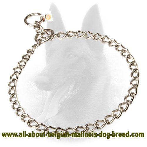 Stainless Belgian Malinois Choke Collar of Steel