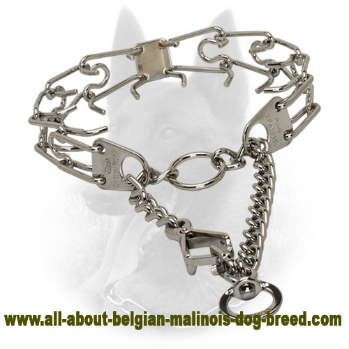 Strong Belgian Malinois Pinch Collar with Reliable Snap Hook