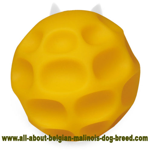 Yellow Belgian Malinois Ball of Tetraflex