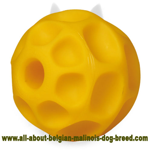 Perfect Belgian Malinois Ball of Tetraflex