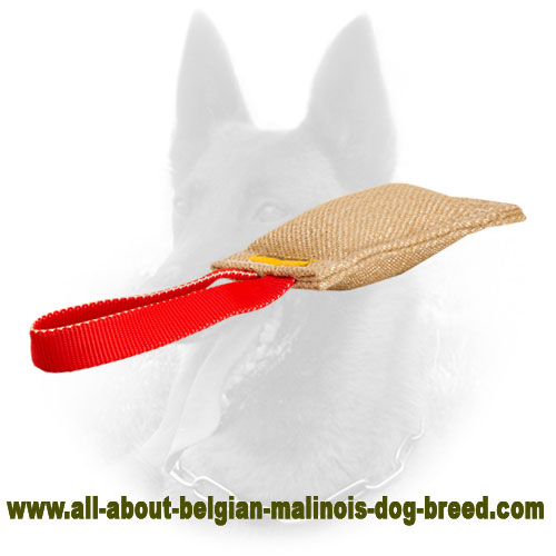 Puppy Belgian Malinois Bite Tag of Jute for Efficient Training