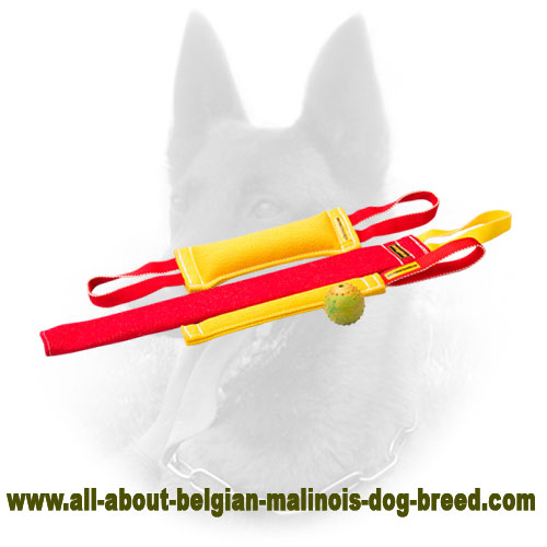 Cool Present with Belgian Malinois Bite Tugs Set