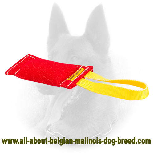 Reliable Belgian Malinois Bite Tug of Safe Material