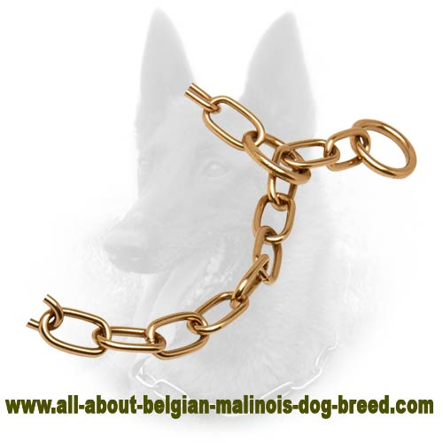 Training Belgian Malinois Fur Saver of Nickel-free Material