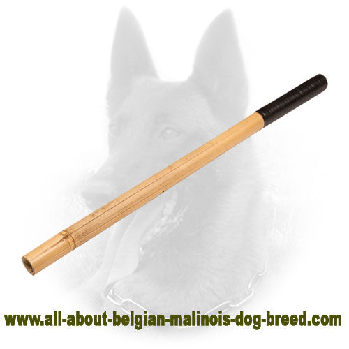 Superable Belgian Malinois Bamboo Stick with Grip Handle