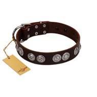 """High and Mighty"" FDT Artisan Classy Brown Leather Belgian Malinois Collar with Embellished Brooches"