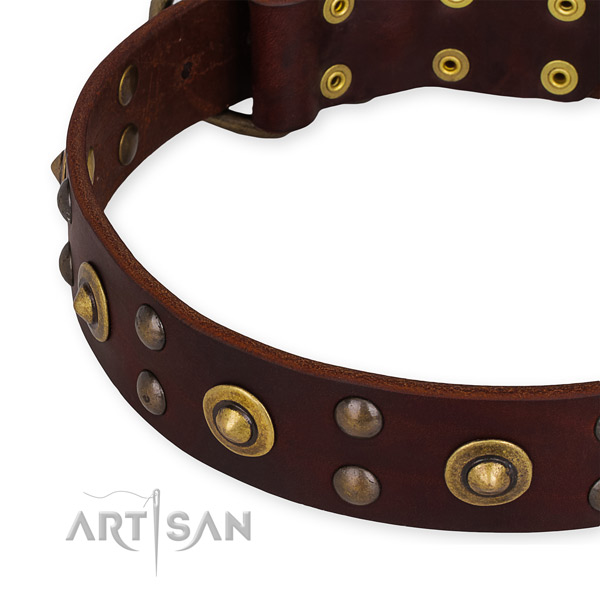 Leather collar with corrosion resistant traditional buckle for your stylish four-legged friend