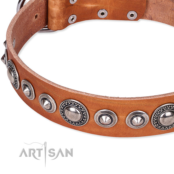 Daily use studded dog collar of top quality full grain natural leather
