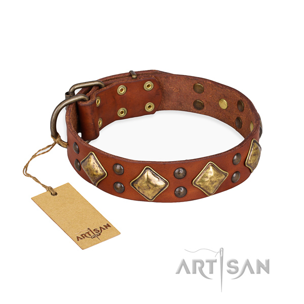Fancy walking embellished dog collar with rust resistant traditional buckle