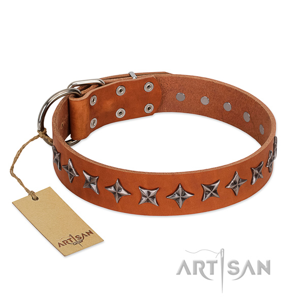 Basic training dog collar of strong full grain leather with studs
