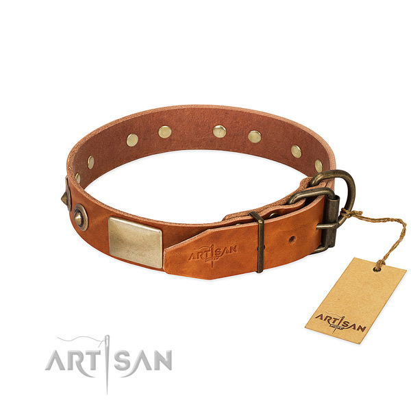 Rust resistant buckle on daily walking dog collar