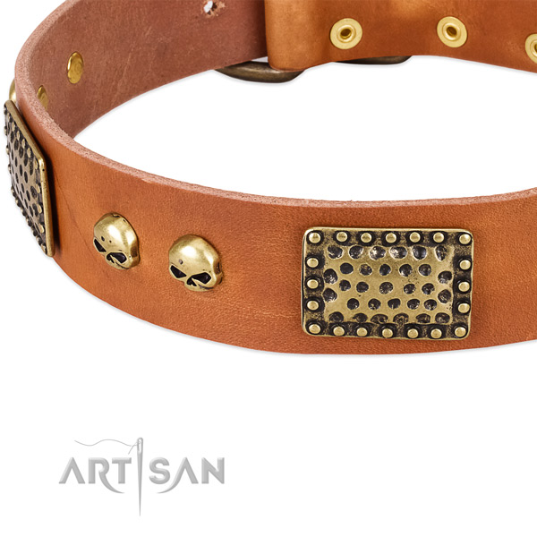 Corrosion proof buckle on leather dog collar for your dog