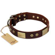 """Shining Armour"" FDT Artisan Brown Leather Belgian Malinois Collar with Decorations"