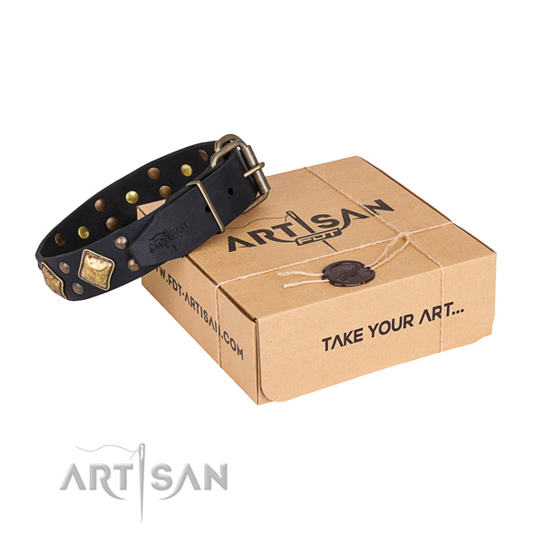 Fancy walking dog collar with Designer durable embellishments