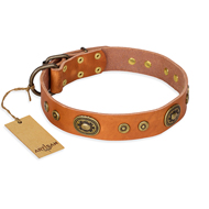 """Dandy Pet"" FDT Artisan Handcrafted Tan Leather Belgian Malinois Collar"